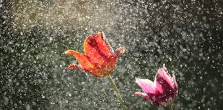 необходимость дождей