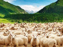 запрещено разводить мелкий скот