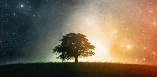 путь к дереву жизни