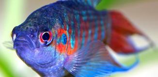 рыбные жертвы, рыбы