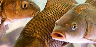 вопрос о рыбе