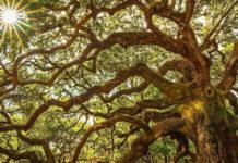 Возвращение к Дереву жизни