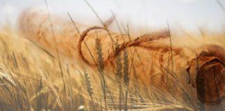 Книга Рут с комментарием Виленского Гаона