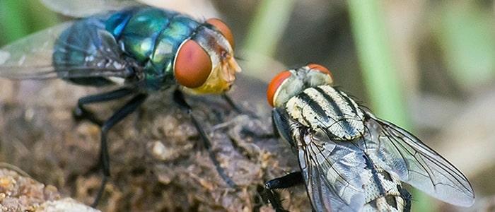 мухи и мир